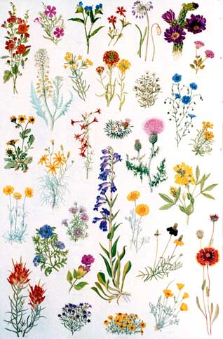 Posters \u2013 Native Plant Society of New Mexico