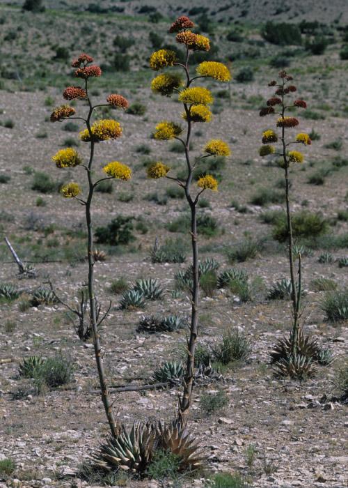 Grants – Native Plant Society of New Mexico
