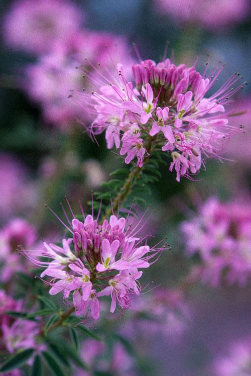 Santa Fe   Native Plant Society of New Mexico