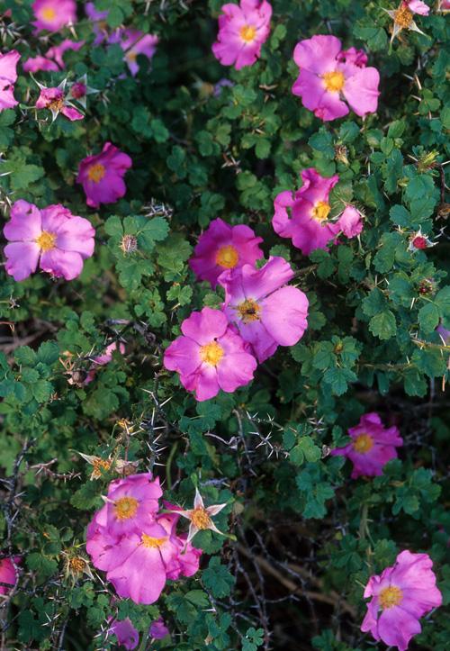 trees-shrubs photo – Native Plant Society of New Mexico