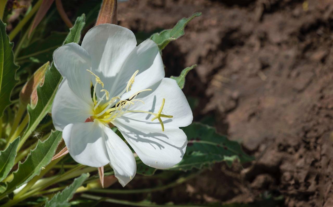 native plant society of new mexico  u2013 new mexico u0026 39 s voice for native plants