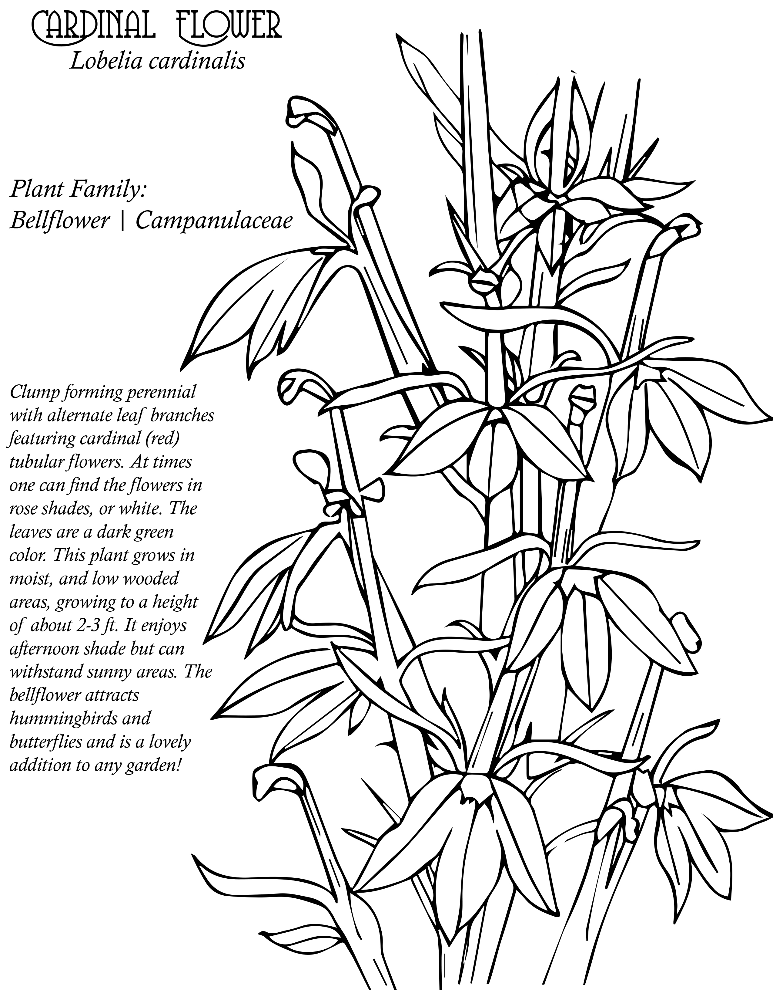 Native Plant Coloring Book Native Plant Society Of New Mexico